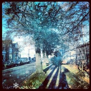 Halifax trees fall 2012